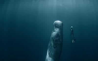 Exploratorium 2021: sumergirse para respirar